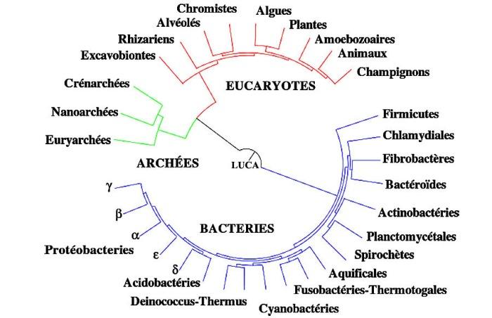 Droits réservés - © 2008 Adapté de Cicarelli et al. (2006, Science), version française par Dosto