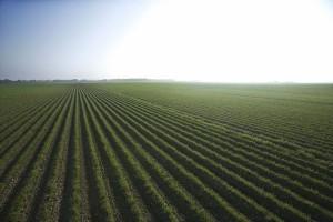 [Trad] L'agriculture biologique et l'environnement